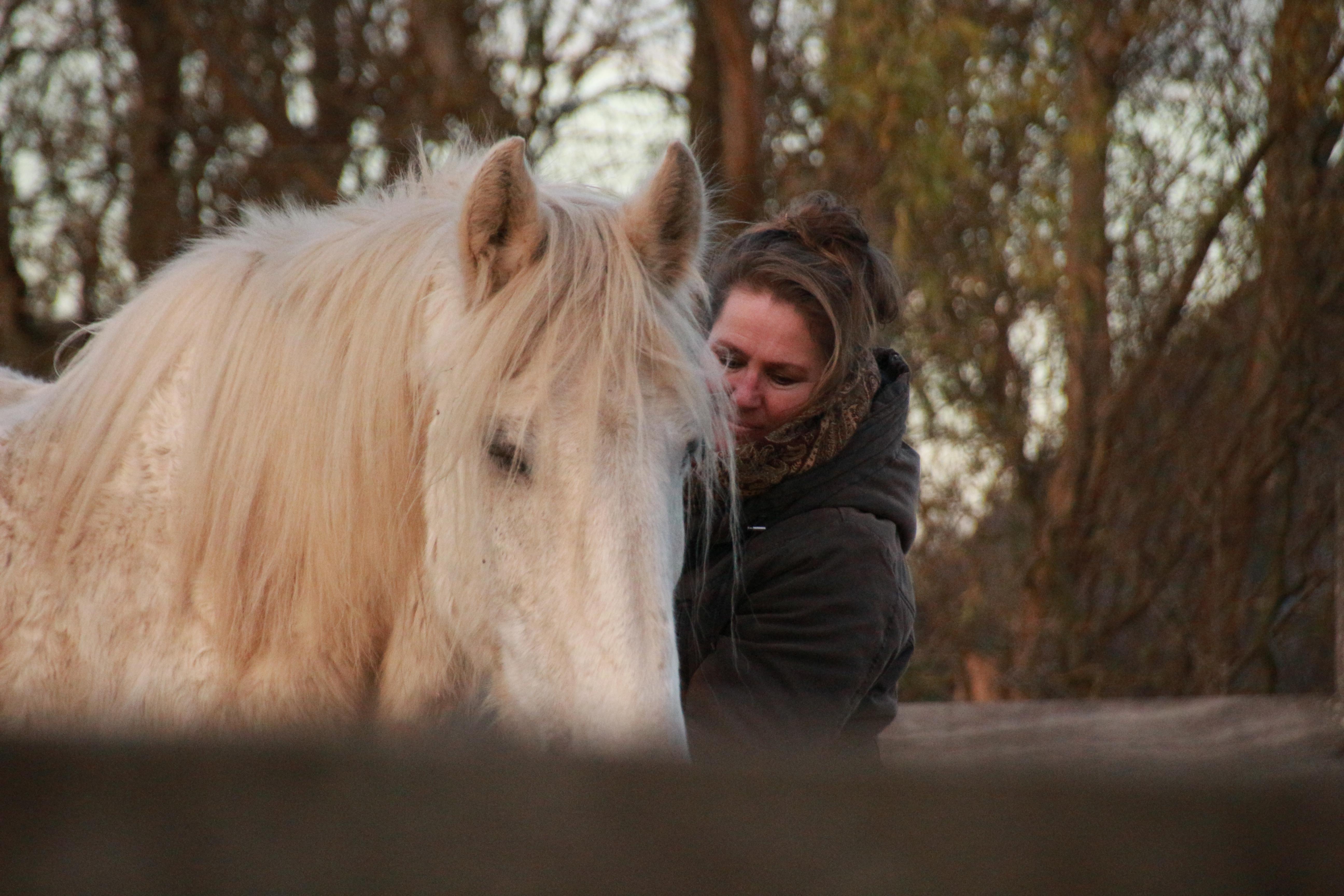 Paardencoaching - Utrecht - Gelderland